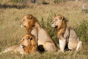 Wildlife Tours in Kenya