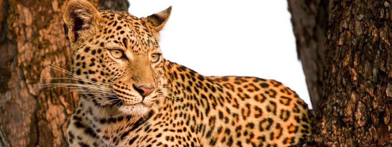 Kenya Wildlife Photo Safaris