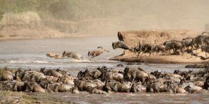Maasai Mara Safaris Kenya
